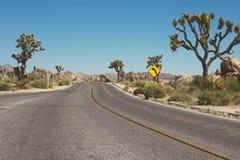 Gepflasterte Wüstenstraße durch Joshua Tree National Pa lizenzfreie stockfotos