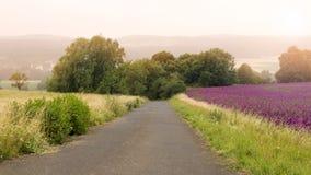 Gepflasterter Weg auf der Landschaft mit Feldern von Blumen Stockfotografie