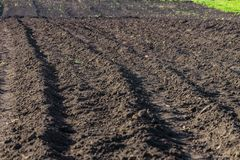 Gepflogen, gepflanzt und das Hilling rudert Schwarzerdefeld Grundbeschaffenheit Lizenzfreies Stockfoto