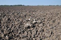 Gepflogen mit Traktorpflugfeld, nachdem Ernte aufgehoben worden ist lizenzfreie stockfotos