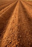Gepflogene Boden-Landwirtschaftsfelder des roten Lehms Stockfotos