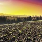Gepflogene Felder bei Sonnenaufgang Lizenzfreie Stockbilder