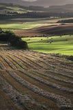 Gepflogene Felder an der Queens-Ansicht in Schottland Stockfotos