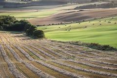 Gepflogene Felder an der Queens-Ansicht in Schottland Stockbild
