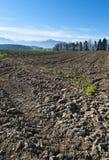 Gepflogene Felder in der Schweiz Stockbild