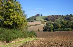 Gepflogene Felder, England Stockfotografie