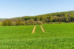 Gepflogene Felder Weizenanbau Feld nahe bei dem Holz lizenzfreie stockfotos