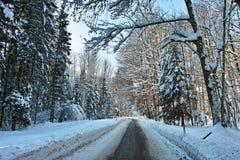 Gepflogene Straße durch schneebedeckten Wald Stockfotografie