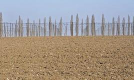 Gepflogener Bauernhof mit dem Satz bereit zum Pflanzen von Traubenschößlingen Stockbild