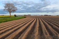 Gepflogenes Feld auf Ackerland Stockfoto