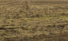 Gepflogenes Feld Boden vorbereitet für das Säen von Samen und das Pflanzen Stockbilder