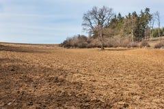 Gepflogenes Feld in der Tschechischen Republik Frühlingsbauernhofarbeit Bewirtschaften Sie Landschaft Lizenzfreie Stockfotos