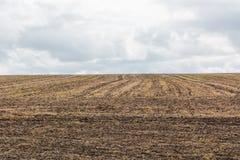 Gepflogenes Feld für das Pflanzen von Anlagen und von Gemüse Lizenzfreies Stockfoto