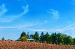 Gepflogenes Feld, grüne Fichte und blauer Himmel, das gepflogene Feld unter dem blauen Himmel Stockfoto