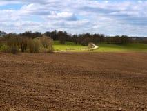 Gepflogenes Feld, grüne Fichte und blauer Himmel, das gepflogene Feld unter dem blauen Himmel Stockfotografie