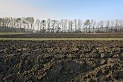Gepflogenes Feld mit Baumreihe und blauem Himmel Lizenzfreie Stockfotografie