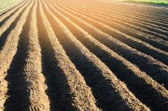 Gepflogenes Feld nach Bearbeitung bereitete sich für das Pflanzen von landwirtschaftlichen Kulturen vor Landschaft mit Ackerland  Lizenzfreie Stockbilder