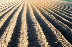 Gepflogenes Feld nach Bearbeitung bereitete sich für das Pflanzen von landwirtschaftlichen Kulturen vor Landschaft mit Ackerland  Lizenzfreies Stockfoto