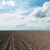 Gepflogenes Feld und drastischer Himmel Lizenzfreie Stockfotos