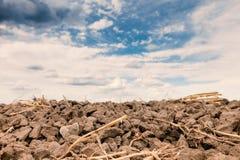 Gepflogenes Feld und drastischer Himmel Stockfoto