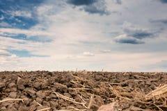 Gepflogenes Feld und drastischer Himmel Stockbilder