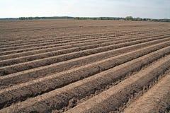Gepflogenes landwirtschaftliches Feld Stockbilder