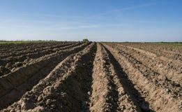 Gepflogenes landwirtschaftliches Feld Gestalten Sie mit dem Ackerland landschaftlich, vor kurzem gepflogen und für die Ernte am s lizenzfreies stockbild