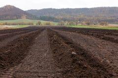 Gepflogenes Landwirtschaftsfeld mit dunklem Boden Stockbild