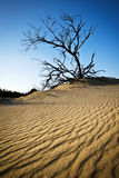 Geplätscherte Sanddüne-Jockeysridge-äußere Querneigungen NC Stockfoto