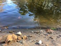 Geplätschertes Ufer Stockfotos