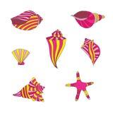 Geplaatst Shells Stock Foto