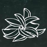 Geplaatste aardappelwiggen Snel voedsel Geïsoleerd op een Zwarte Bordachtergrond Realistische de Stijlhand Getrokken Schets van h vector illustratie