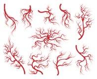 Geplaatste aders en capillaire pictogrammen stock illustratie