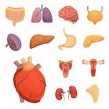 Geplaatste beeldverhaal Menselijke Organen Anatomie van lichaamsillustraties stock illustratie