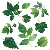 Geplaatste bladeren Stock Afbeeldingen