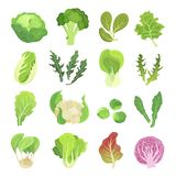 Geplaatste bladgroenten, landbouw en groene installatie royalty-vrije illustratie