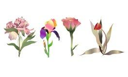 Geplaatste bloemen Royalty-vrije Stock Foto