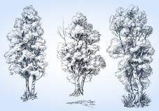 Geplaatste bomen Royalty-vrije Stock Foto