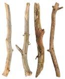 Geplaatste boomtakken royalty-vrije stock foto