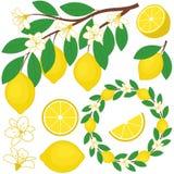 Geplaatste citroenen Royalty-vrije Stock Foto