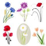 Geplaatste de bloemen van de weide Stock Afbeeldingen
