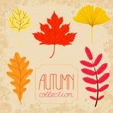 Geplaatste de herfst kleurrijke bladeren Royalty-vrije Stock Foto's