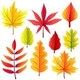 Geplaatste de herfst retro bladeren Royalty-vrije Stock Foto