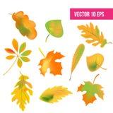 Geplaatste de herfstbladeren, geïsoleerd op witte achtergrond Vector illustratie de bladeren van de dalingsherfst, pictogrampak royalty-vrije illustratie