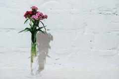 Geplaatste de lentebloemen op witte baksteenachtergrond Stock Fotografie