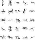 Geplaatste de pictogrammen van het insect Stock Foto's
