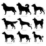 Geplaatste de silhouetten van hondrassen Hoog gedetailleerde, vlotte vectorillustratie royalty-vrije illustratie