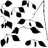 Geplaatste de Tak van de berk - Silhouetten vector illustratie