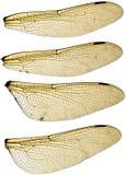 Geplaatste de Vleugels van de libel Stock Foto's
