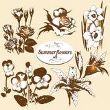 Geplaatste de zomerbloemen Stock Afbeeldingen